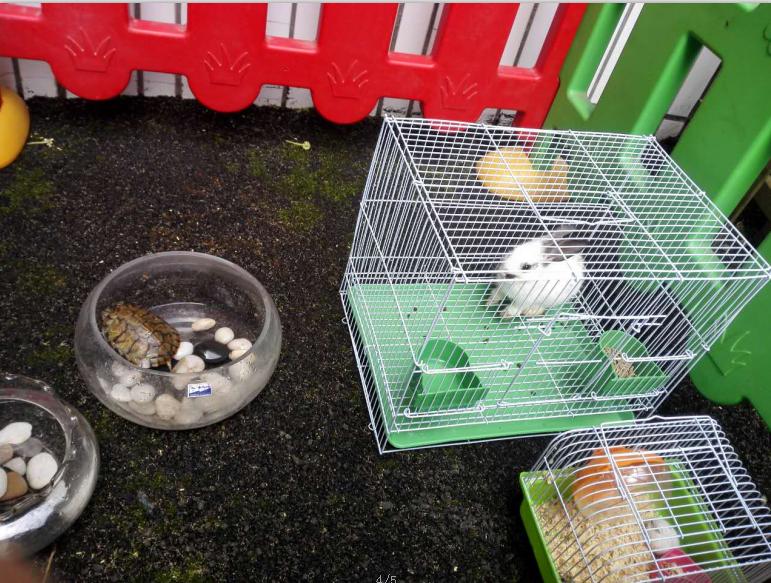 搭建小动物家园——欢迎新朋友-望月湖幼儿园