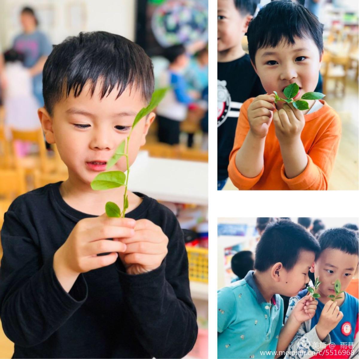 春草纷碧色,夏木已成荫——学思路幼儿园二十四节气课堂之立夏活动图片