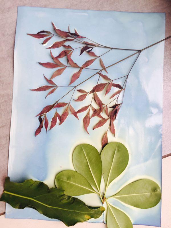 花与草的故事 (3)